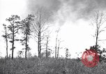 Image of forest fire Cochran Oregon USA, 1932, second 12 stock footage video 65675035161