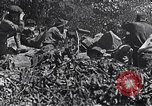 Image of Battle of Blair Mountain West Virginia United States USA, 1921, second 11 stock footage video 65675035170