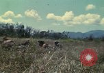 Image of US Marines Da Nang Vietnam, 1968, second 5 stock footage video 65675035398