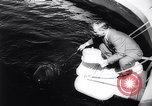 Image of pilot whale Bubble Palos Verdes California USA, 1958, second 5 stock footage video 65675035447