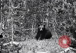 Image of bear New York United States USA, 1916, second 1 stock footage video 65675035671