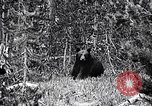 Image of bear New York United States USA, 1916, second 2 stock footage video 65675035671