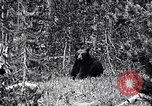 Image of bear New York United States USA, 1916, second 3 stock footage video 65675035671
