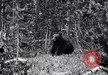 Image of bear New York United States USA, 1916, second 5 stock footage video 65675035671