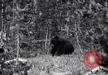 Image of bear New York United States USA, 1916, second 6 stock footage video 65675035671