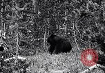 Image of bear New York United States USA, 1916, second 7 stock footage video 65675035671