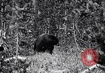 Image of bear New York United States USA, 1916, second 8 stock footage video 65675035671