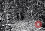 Image of bear New York United States USA, 1916, second 10 stock footage video 65675035671