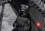 Image of bear New York United States USA, 1916, second 12 stock footage video 65675035671