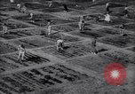 Image of victory gardens in World War I United States USA, 1917, second 1 stock footage video 65675035873
