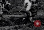 Image of victory gardens in World War I United States USA, 1917, second 8 stock footage video 65675035873
