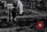 Image of victory gardens in World War I United States USA, 1917, second 11 stock footage video 65675035873