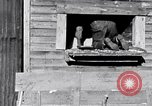 Image of negro workers South Carolina United States USA, 1936, second 5 stock footage video 65675035945