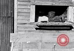 Image of negro workers South Carolina United States USA, 1936, second 7 stock footage video 65675035945
