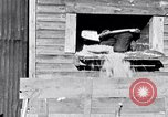 Image of negro workers South Carolina United States USA, 1936, second 9 stock footage video 65675035945