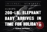 Image of new born baby elephant Europe, 1938, second 1 stock footage video 65675036139