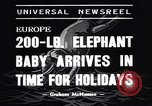 Image of new born baby elephant Europe, 1938, second 2 stock footage video 65675036139