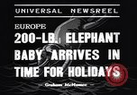 Image of new born baby elephant Europe, 1938, second 3 stock footage video 65675036139