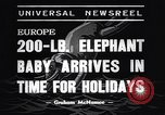 Image of new born baby elephant Europe, 1938, second 4 stock footage video 65675036139