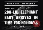 Image of new born baby elephant Europe, 1938, second 5 stock footage video 65675036139