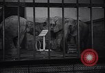 Image of new born baby elephant Europe, 1938, second 9 stock footage video 65675036139