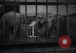 Image of new born baby elephant Europe, 1938, second 10 stock footage video 65675036139