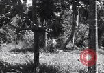 Image of Coast Watcher Bougainville Island Papua New Guinea, 1943, second 6 stock footage video 65675036175