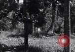 Image of Coast Watcher Bougainville Island Papua New Guinea, 1943, second 10 stock footage video 65675036175