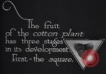 Image of cotton farming fruit stage Southern United States USA, 1922, second 6 stock footage video 65675036513