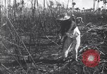 Image of Fidel Castro Cuba, 1963, second 10 stock footage video 65675036873