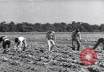 Image of Ford Experimental Farm Ways Georgia USA, 1939, second 1 stock footage video 65675037017