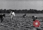 Image of Ford Experimental Farm Ways Georgia USA, 1939, second 3 stock footage video 65675037017