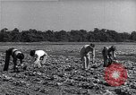 Image of Ford Experimental Farm Ways Georgia USA, 1939, second 4 stock footage video 65675037017