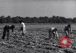 Image of Ford Experimental Farm Ways Georgia USA, 1939, second 5 stock footage video 65675037017