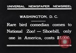 Image of rare bird Shoebill Washington DC USA, 1931, second 1 stock footage video 65675037103