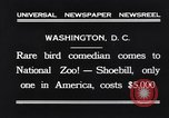 Image of rare bird Shoebill Washington DC USA, 1931, second 3 stock footage video 65675037103