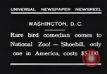 Image of rare bird Shoebill Washington DC USA, 1931, second 4 stock footage video 65675037103