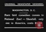 Image of rare bird Shoebill Washington DC USA, 1931, second 5 stock footage video 65675037103