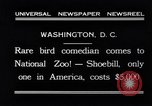 Image of rare bird Shoebill Washington DC USA, 1931, second 11 stock footage video 65675037103