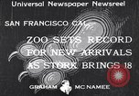 Image of infant cubs San Francisco California USA, 1933, second 1 stock footage video 65675037110