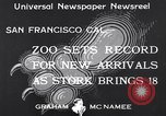 Image of infant cubs San Francisco California USA, 1933, second 2 stock footage video 65675037110