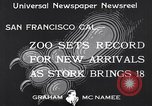 Image of infant cubs San Francisco California USA, 1933, second 3 stock footage video 65675037110