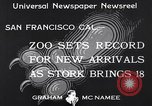 Image of infant cubs San Francisco California USA, 1933, second 4 stock footage video 65675037110