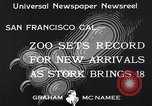 Image of infant cubs San Francisco California USA, 1933, second 6 stock footage video 65675037110
