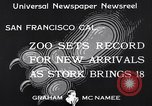Image of infant cubs San Francisco California USA, 1933, second 8 stock footage video 65675037110