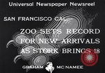 Image of infant cubs San Francisco California USA, 1933, second 9 stock footage video 65675037110