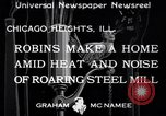 Image of Robin's nest Chicago Heights Illinois USA, 1933, second 1 stock footage video 65675037114