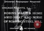 Image of Robin's nest Chicago Heights Illinois USA, 1933, second 4 stock footage video 65675037114