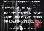 Image of Robin's nest Chicago Heights Illinois USA, 1933, second 5 stock footage video 65675037114