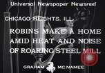 Image of Robin's nest Chicago Heights Illinois USA, 1933, second 6 stock footage video 65675037114